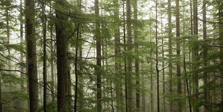 Sunlight peeking through a dense forest.